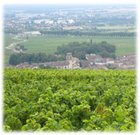 Pommard and its vineyard